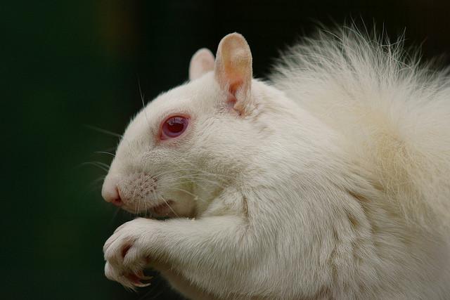 альбинос11
