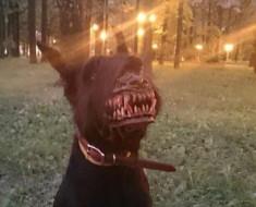 добрый пес ава