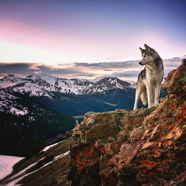 волк 5