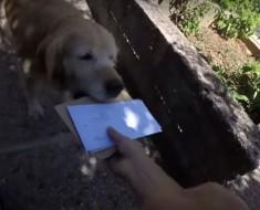 собака почта