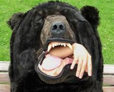 медведь3