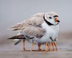 птиц3