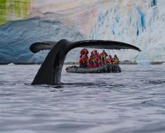 кит23