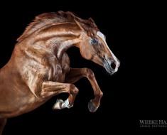 конь11