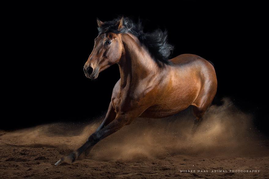 конь6